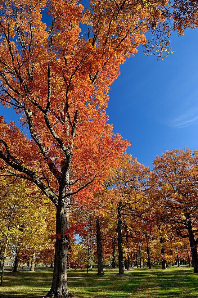 Last years fall at Fort Niagara State Park, NY