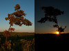 Sunset and Moonrise, Autumnal Equinox Sept 22 2010<br /> Malcolm Park
