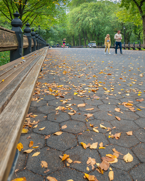 Fall has begun on The Mall in Central Park