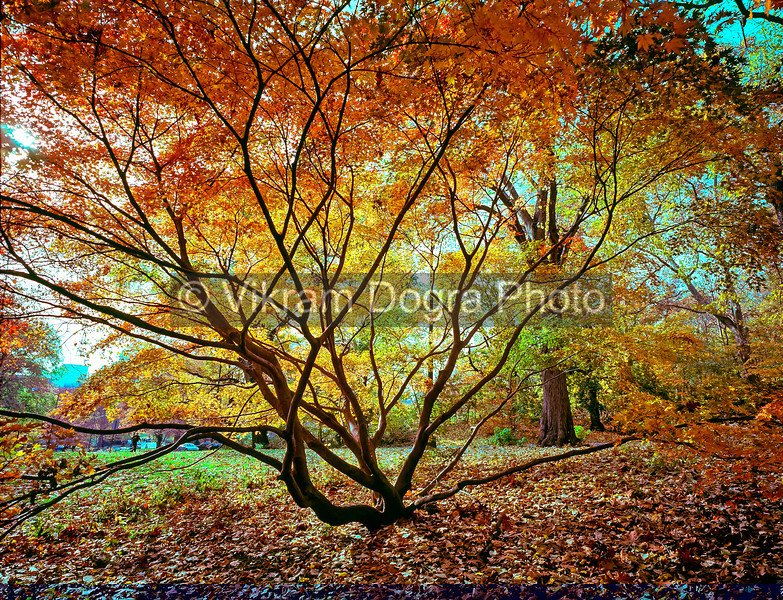 Autumn in Central Park, NYC, 2012