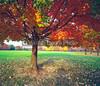 Autumn Trees, Central Park, NYC