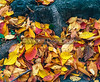 Autumn Leaves, Central Park, NYC