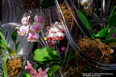 New York Botanical Garden - Orchid Show - March 17 2018