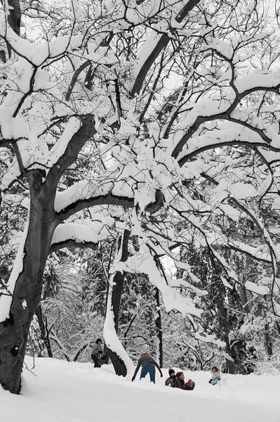 new_york_snow-1894