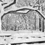new_york_snow-1816