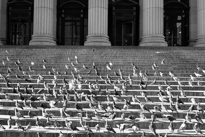 Bird Steps_ bw