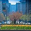 Park Ave @ Springtime