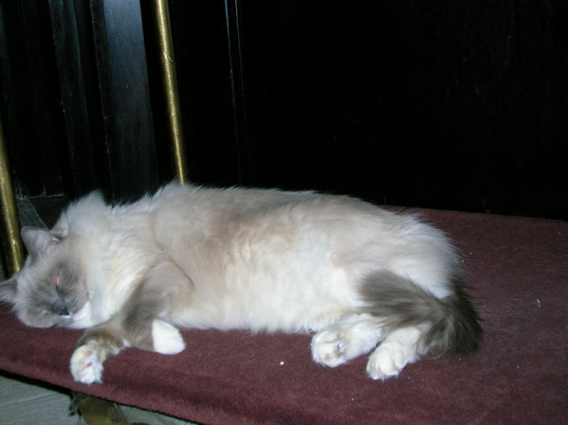 The Algonquin kitty, who was always a fixture at the hotel. Of course, Casey couldn't resist a shot of him!
