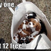 "E-mail She Sent Me - We would send each other links from this website ""ihasahotdog.com"" and any other random puppy-related funny things we came across. She sent this to me once, explaining it as ""PUPPIES IN A BAG."""