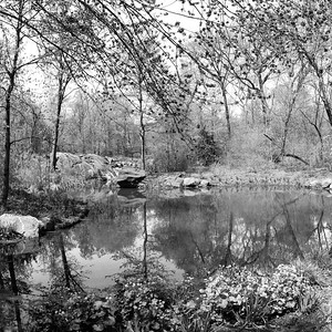 The Ravine in Spring _ bw
