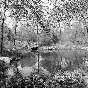 The Ravine in Spring _ bw