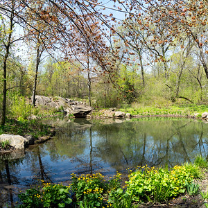 The Ravine in Spring