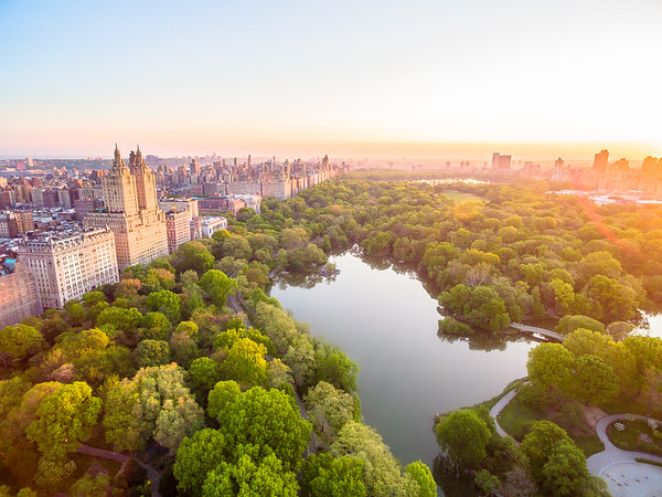 Central Park Summer Sunrise