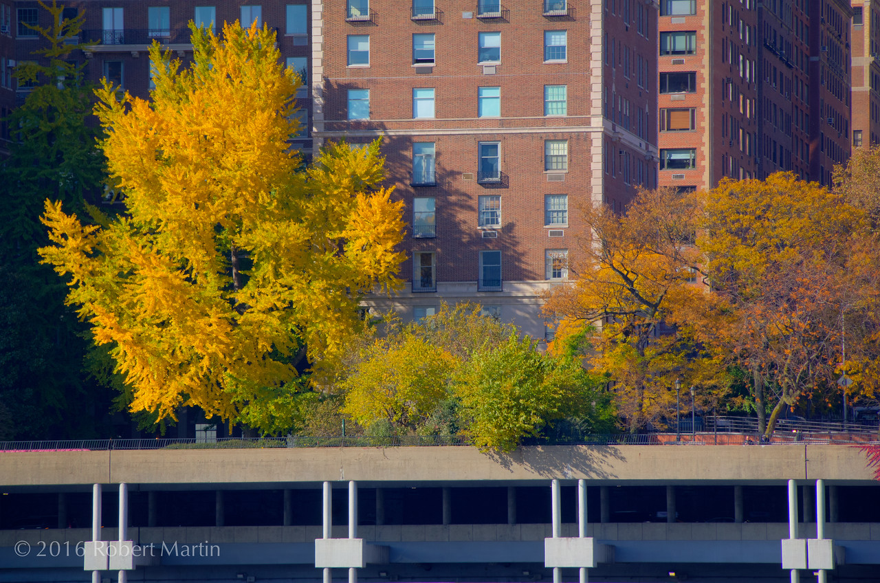 Fall Colors on the FDR