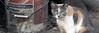 JakeRemington-img_3711-HEADER