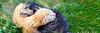 NoPhotographer-35367172-Zwei-neugeborene-K-tzchen-auf-dem-Rasen-Lizenzfreie-Bilder-HEADER