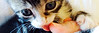 EvonHandras-Kitten02-HEADER