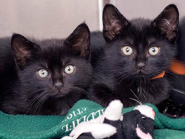 JoeGalka-Kittens face photo-PHOTO