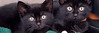 JoeGalka-Kittens face photo-HEADER