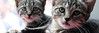 JerrittClark-photo-adoptapalooza14-HEADER