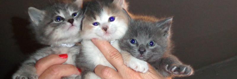IrisLugo-3 cute kittens-HEADER