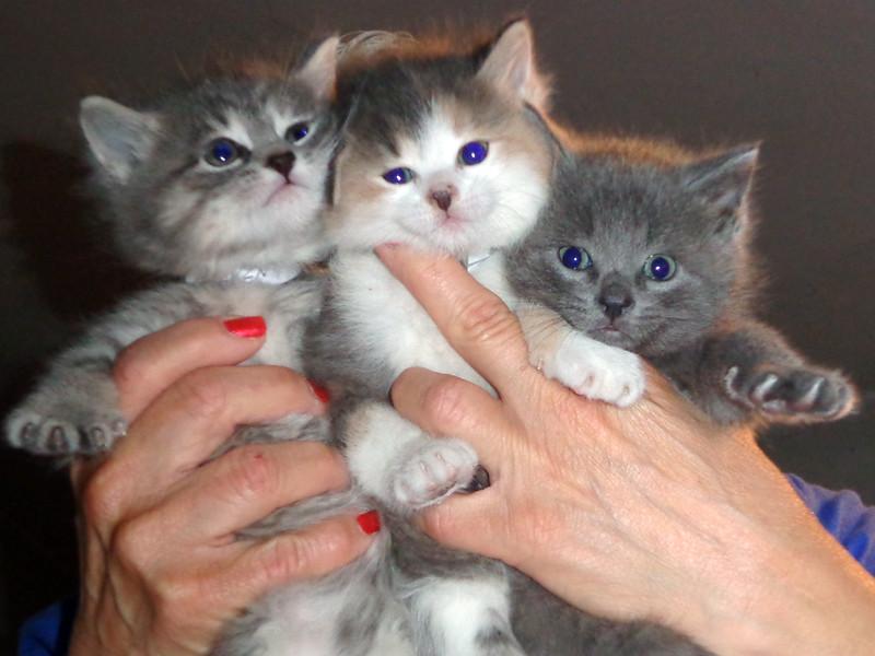 IrisLugo-3 cute kittens-PHOTO
