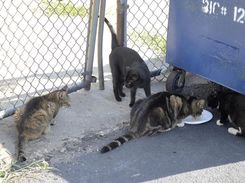 NYCFCIPhoto-Cats35-MaggieONeill
