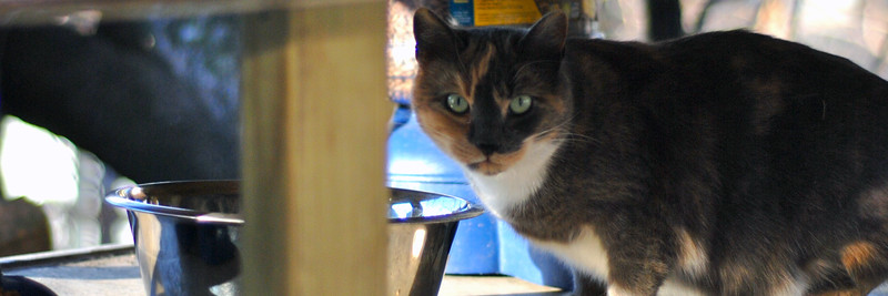 UrbanCatLeague-CAT236thFeedingstation-HEADER