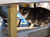UrbanCatLeague-CAT236thFeedingstation