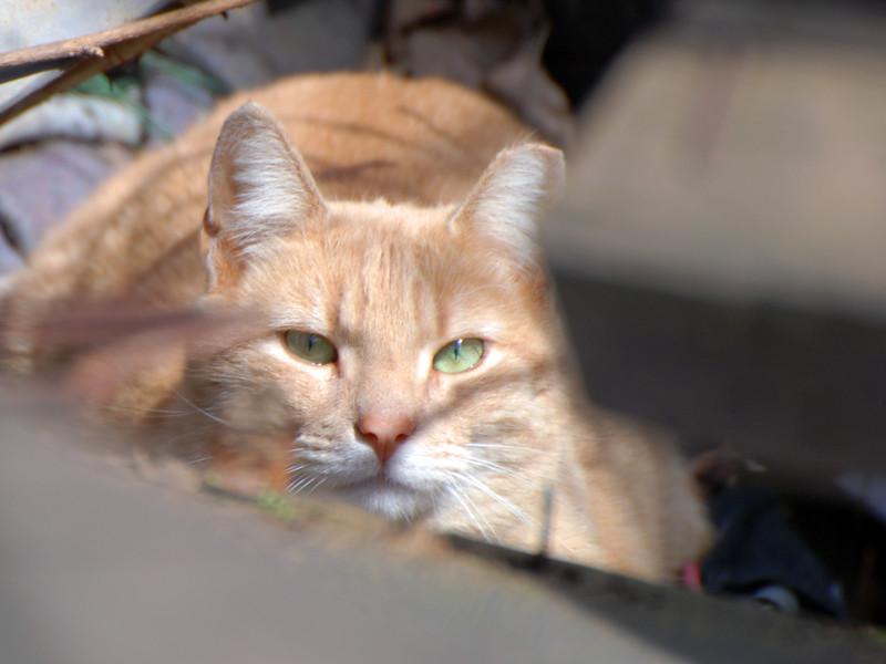 UrbanCatLeague-CAT4-36th-PHOTO