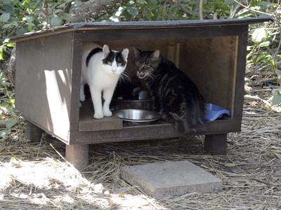 Feeding Stations