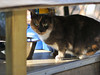 UrbanCatLeague-CAT236thFeedingstation-PHOTO