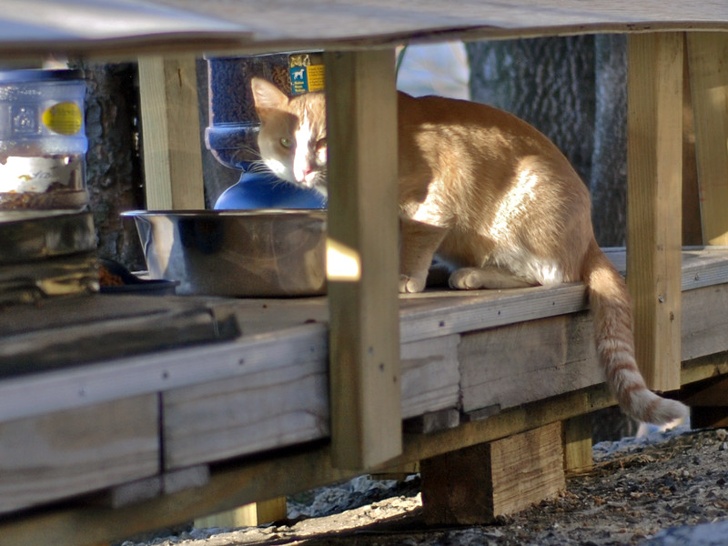 UrbanCatLeague-CAT3-36thFeedingStation-PHOTO