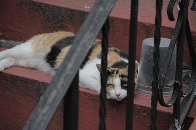 Feral Cat Photos - Jake Remington