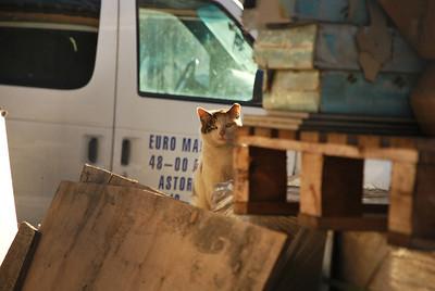 Feral Cat Photos - Krista Menzel