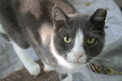 Feral Cat Photos - Maggie O'Neill