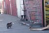 UrbanCatLeague-DSC00247