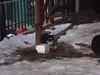 UrbanCatLeague-YukariKomeno-DSC05735