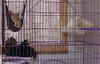 UrbanCatLeague-kittensincage2