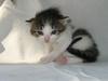 ValerieSicignano-kitten-pink-nose