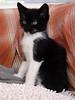 MikePhillips-jfkcats17v