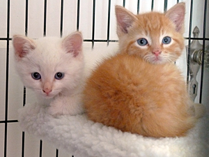 NYCFCIPhoto-Kittens01-UrbanCatLeague