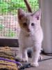MikePhillips-jfkcats15v