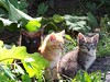 draft_lens18793543module154693685photo_1323928542Kittens