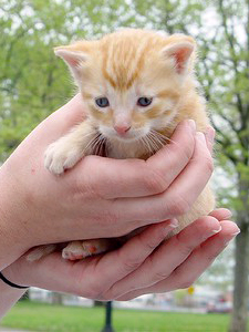 NYCFCIPhoto-Kittens03-UrbanCatLeague