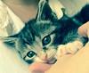 EvonHandras-Kitten01