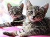 JerrittClark-photo-adoptapalooza14-PHOTO