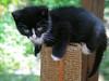 MikePhillips-jfkcats14