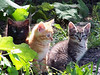 NoPhotographer-Kittens-PHOTO