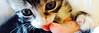 PhotoHead-EvonHandras-Kitten02